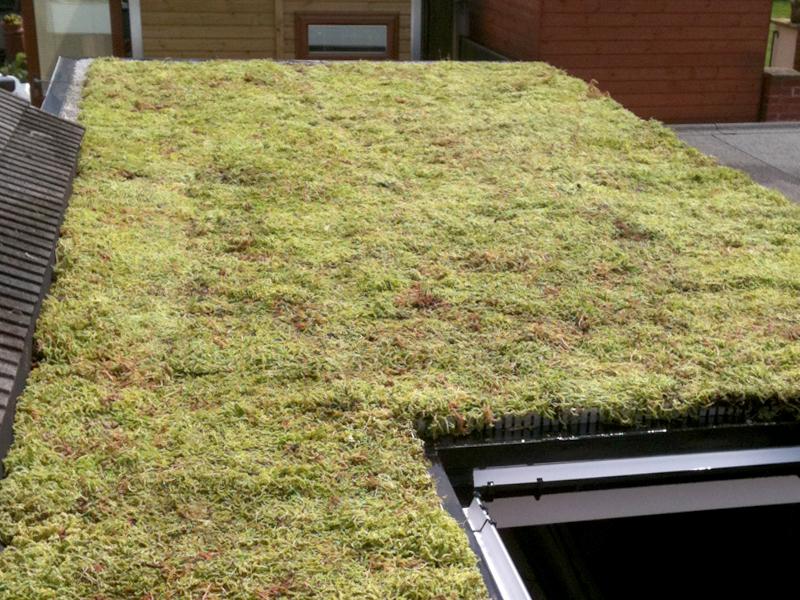 Sedum Roof Sedum Roof Covering is